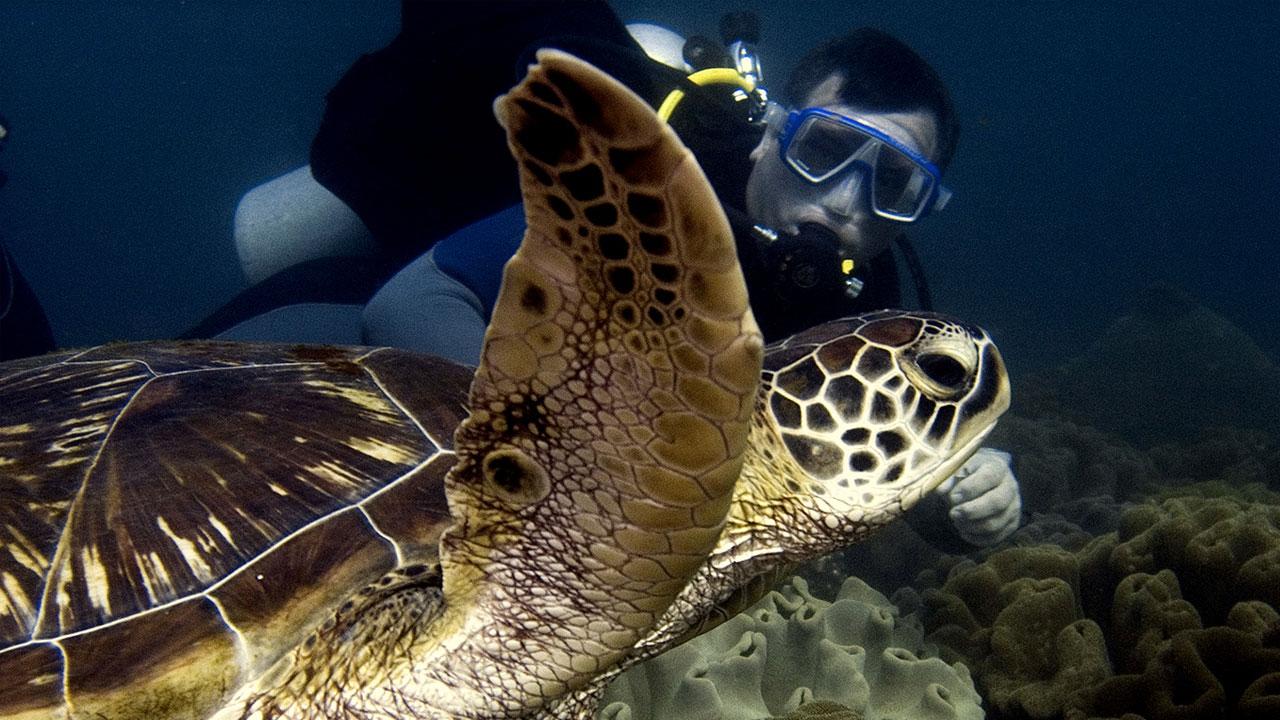 Pierwszy raz nurkowanie żółwie Padang Bai z Diving Indo