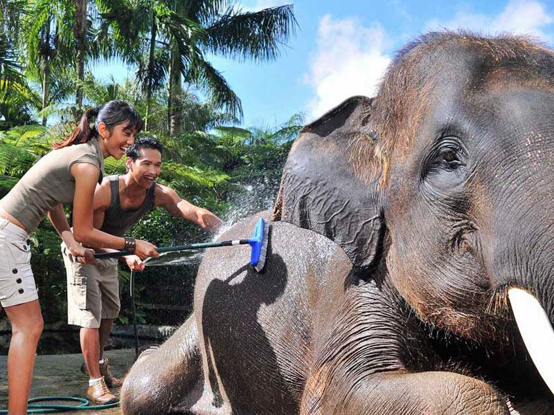 PARK BALI ELEPHANT SAFARI