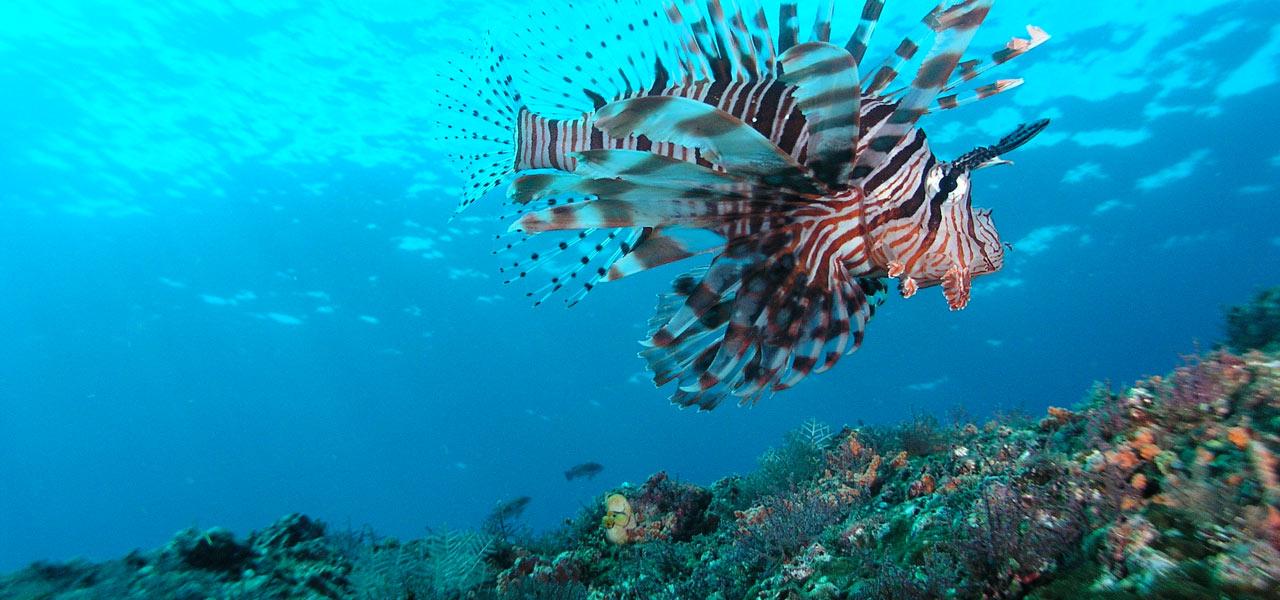 nurkowanie na Bali - Padang Bai