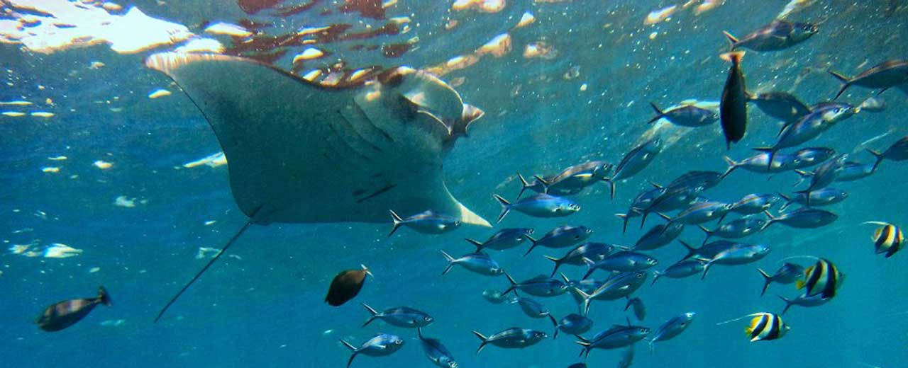 Snorkeling na Bali manty